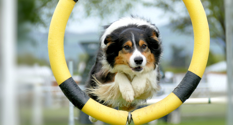 Dog Training Insurance Pet Business Insurance