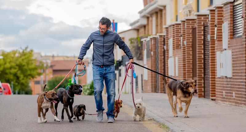 Pet Insurance For Dog Walkers