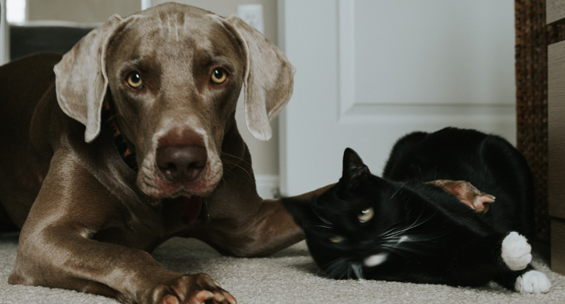 Pet Sitting Insurance including pet boarding and pet minding services